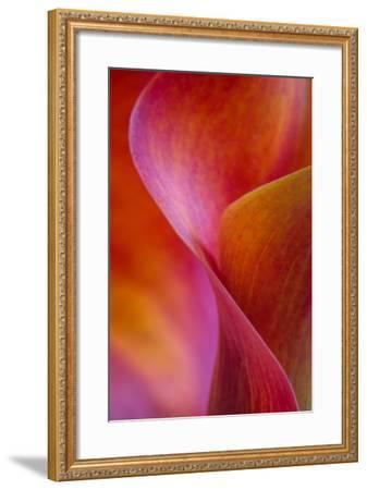 Calla Lily Curves I-Doug Chinnery-Framed Photographic Print