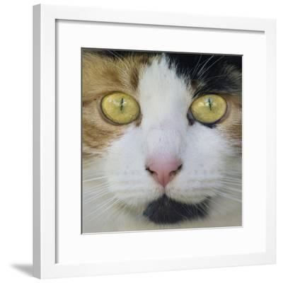 Hunters Eyes-Adrian Campfield-Framed Photographic Print