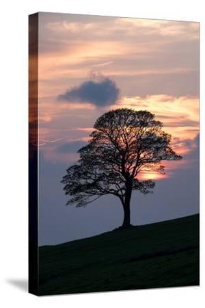 Sunset Sentinel-Doug Chinnery-Stretched Canvas Print