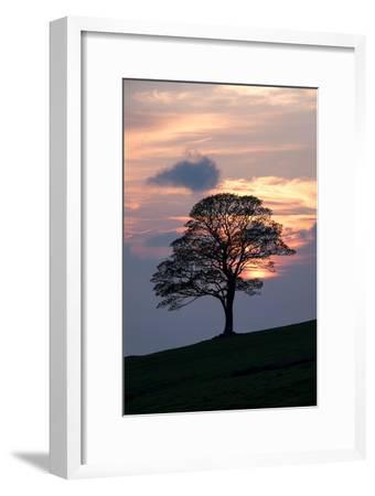 Sunset Sentinel-Doug Chinnery-Framed Photographic Print