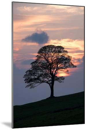 Sunset Sentinel-Doug Chinnery-Mounted Photographic Print