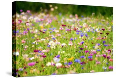 Field of Flowers in Paintography-Philippe Sainte-Laudy-Stretched Canvas Print