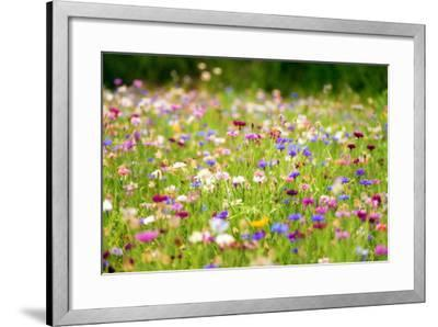 Field of Flowers in Paintography-Philippe Sainte-Laudy-Framed Photographic Print