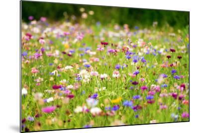 Field of Flowers in Paintography-Philippe Sainte-Laudy-Mounted Photographic Print