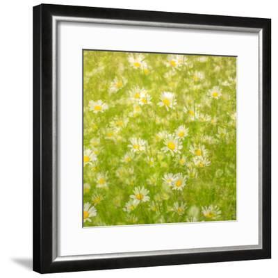 Daisy Meadow-Doug Chinnery-Framed Photographic Print