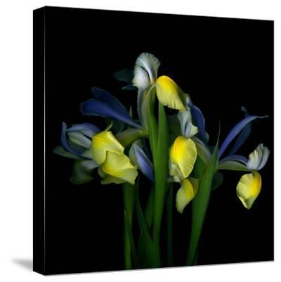 Blue Iris-Magda Indigo-Stretched Canvas Print