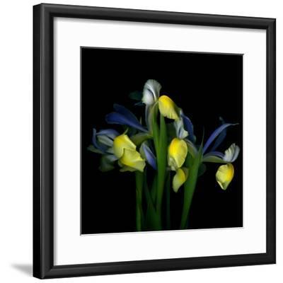 Blue Iris-Magda Indigo-Framed Photographic Print