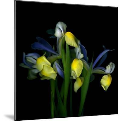 Blue Iris-Magda Indigo-Mounted Photographic Print