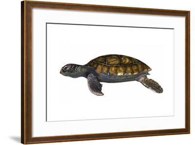 Green Sea Turtle--Framed Art Print
