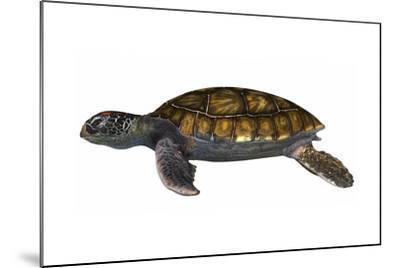 Green Sea Turtle--Mounted Art Print