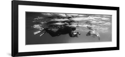 Diver Comes Face to Face with a Leopard Seal, Astrolabe Island, Antarctica--Framed Photographic Print