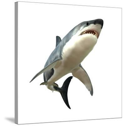 Great White Shark--Stretched Canvas Print