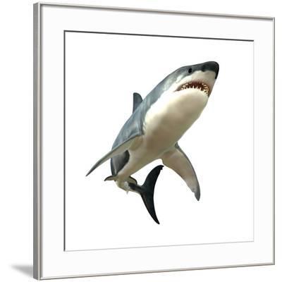 Great White Shark--Framed Art Print