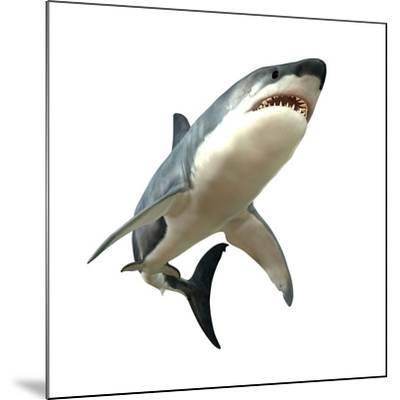 Great White Shark--Mounted Art Print