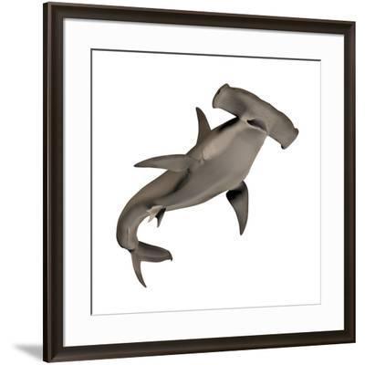 Hammerhead Shark--Framed Art Print