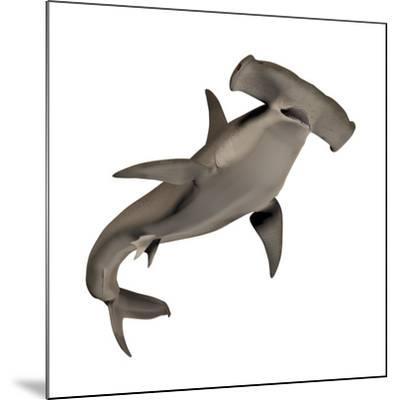 Hammerhead Shark--Mounted Art Print