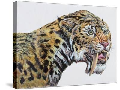 Close-Up Headshot of Megantereon, Pliocene Epoch--Stretched Canvas Print