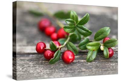 Cranberry-Ana Lukascuk-Stretched Canvas Print