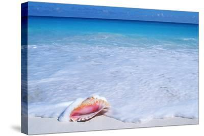 Mexico, Yucatan Peninsula, Carribean Beach at Cancun, Conch Shell on Sand-Chris Cheadle-Stretched Canvas Print