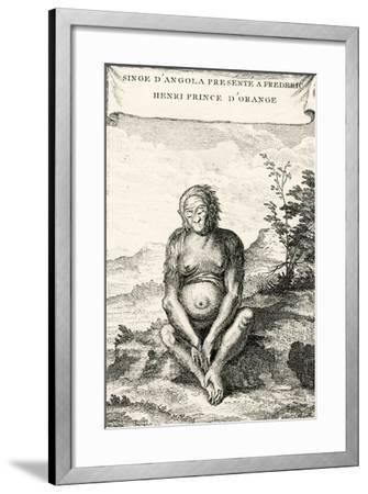 Illustration of the Orang-Outang Presented to Frederick Henry, Prince of Orange, 1750-Abbé Prévost-Framed Giclee Print