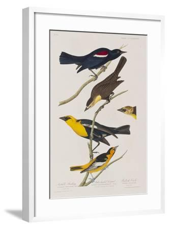 Illustration from 'Birds of America', 1827-38-John James Audubon-Framed Giclee Print