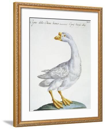 Swan, C.1767-76--Framed Giclee Print