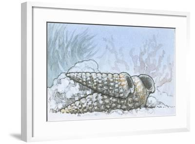 Fossils, Potamides--Framed Giclee Print