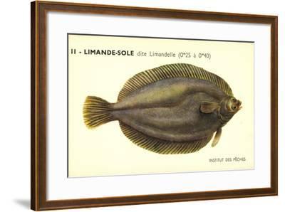 Künstler Fische, Institut Des Peches, Limande Sole Dite Limandelle, Flunder--Framed Giclee Print