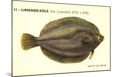 Künstler Fische, Institut Des Peches, Limande Sole Dite Limandelle, Flunder--Mounted Giclee Print