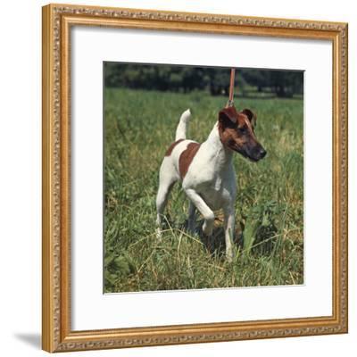 German Hunting Dog--Framed Photographic Print