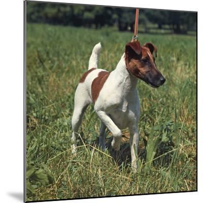 German Hunting Dog--Mounted Photographic Print