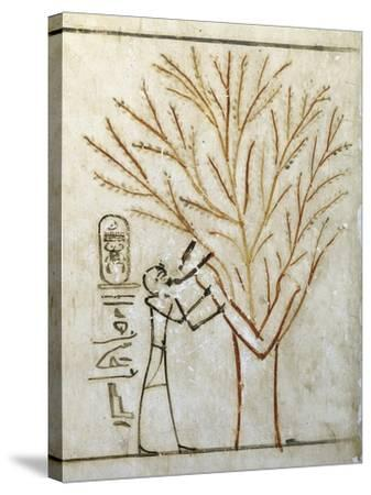 Egypt, Tomb of Thutmose III, Mural Painting of Pharaoh Drinking at Isis in Guise of Tree--Stretched Canvas Print