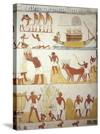 Egypt, Tomb of Royal Estate Supervisor Menna, Vestibule, Mural Paintings, Working in Fields--Stretched Canvas Print
