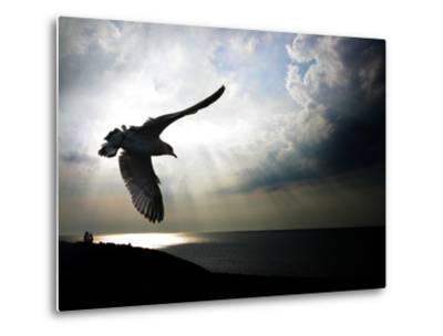 Seagul in flight over Lake Michigan beach, Indiana Dunes, Indiana, USA-Anna Miller-Metal Print