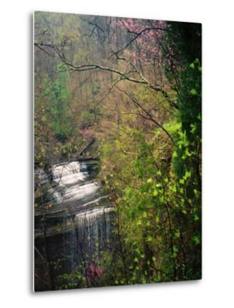 Spring in Clifty Creek State Park, Indiana, USA-Anna Miller-Metal Print