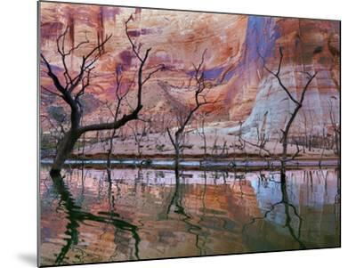 USA, Utah, Glen Canyon Nra. Drought Reveals Dead Trees-Jaynes Gallery-Mounted Photographic Print
