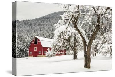 Fresh Snow on Red Barn Near Salmo, British Columbia, Canada-Chuck Haney-Stretched Canvas Print