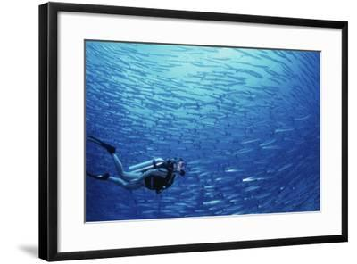 Indonesia, Scuba Diving in Sea-Michele Westmorland-Framed Photographic Print