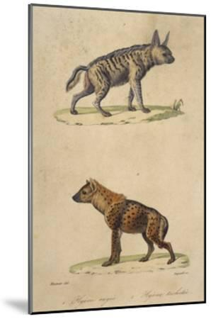 Striped and Spotted Hyena--Mounted Giclee Print