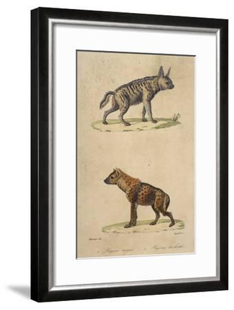 Striped and Spotted Hyena--Framed Giclee Print