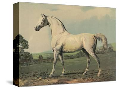 Mambrino (Racehorse)--Stretched Canvas Print