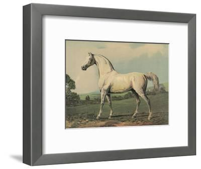 Mambrino (Racehorse)--Framed Giclee Print