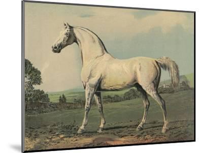 Mambrino (Racehorse)--Mounted Giclee Print