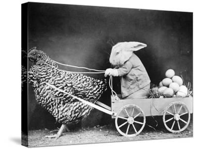 Rabbit in Hen Cart--Stretched Canvas Print