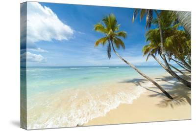Tropical Beach, Caribbean-John Harper-Stretched Canvas Print