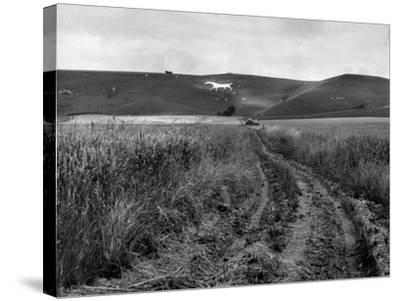 Pewsey White Horse-Fred Musto-Stretched Canvas Print
