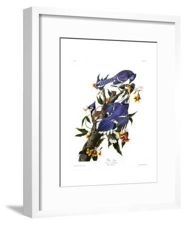 Blue Jay-John James Audubon-Framed Giclee Print