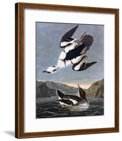 Smew, or White Nun-John James Audubon-Framed Giclee Print