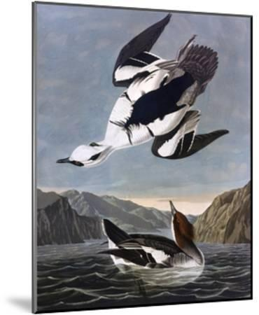 Smew, or White Nun-John James Audubon-Mounted Giclee Print