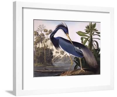 Louisiana Heron-John James Audubon-Framed Giclee Print